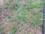 My garden got a little…grassy