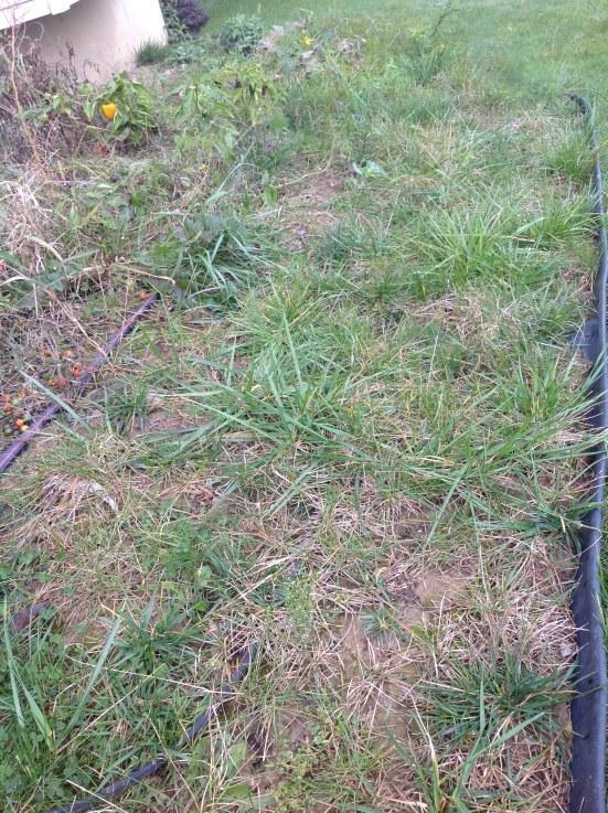 grassy garden